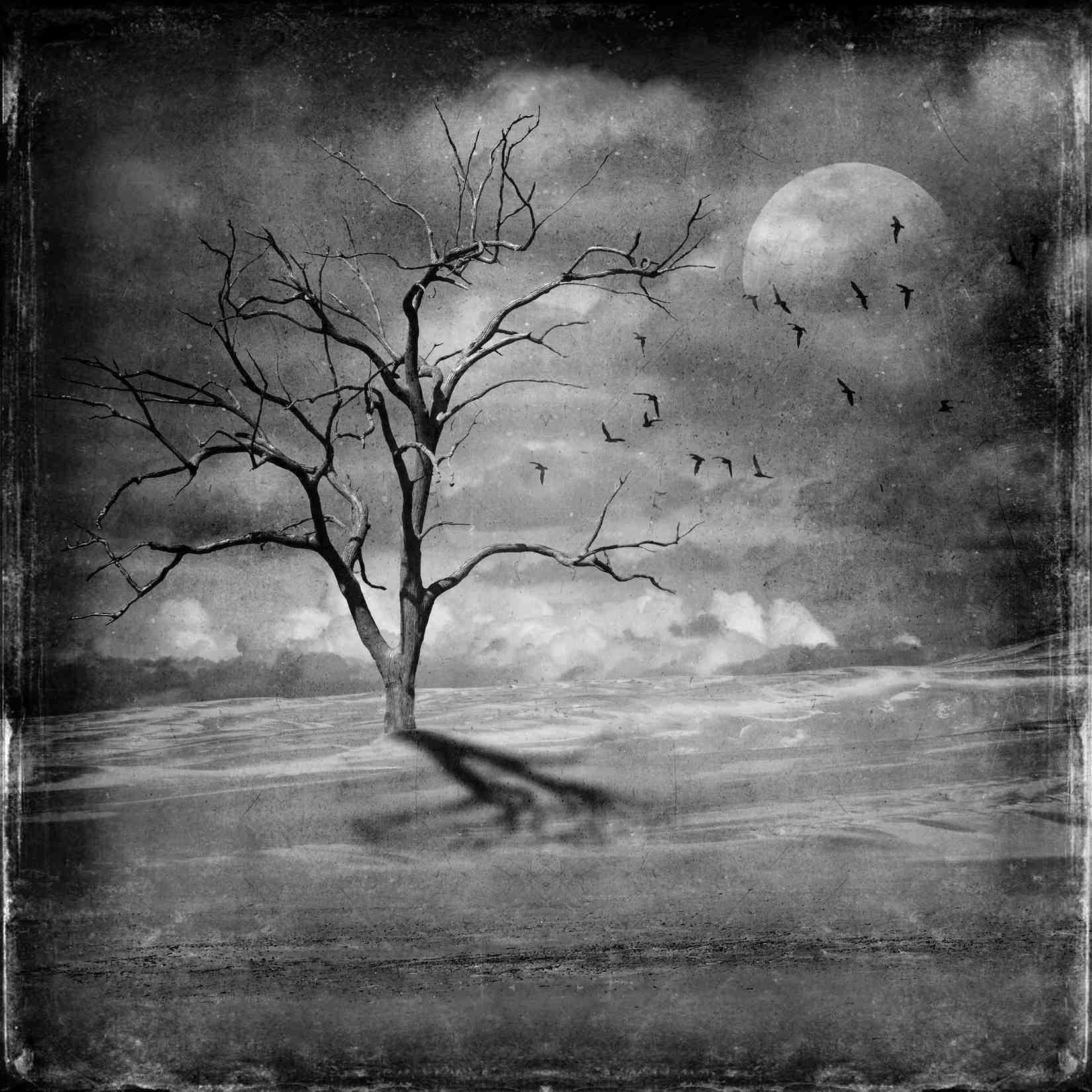 Dead tree in desert landscape