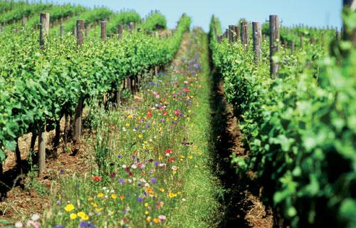 Seria a produção orgânica melhor que a convencional?