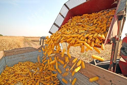 Breve análise do PIB agrícola em 2013/2014
