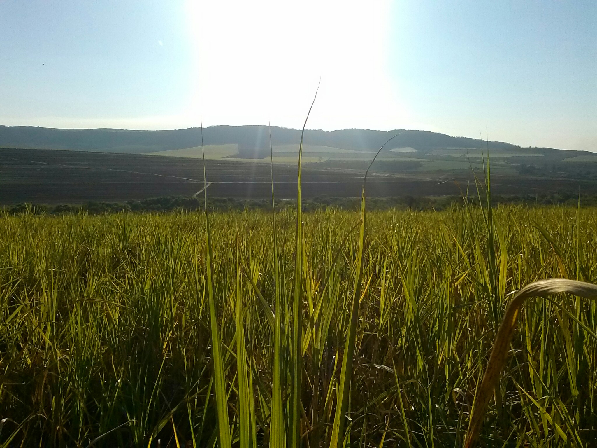 Quanto de cana produz açúcar e quanto produz etanol no Brasil