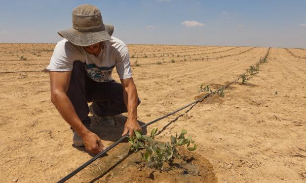 Agricultor instalando sistema de gotejamento.