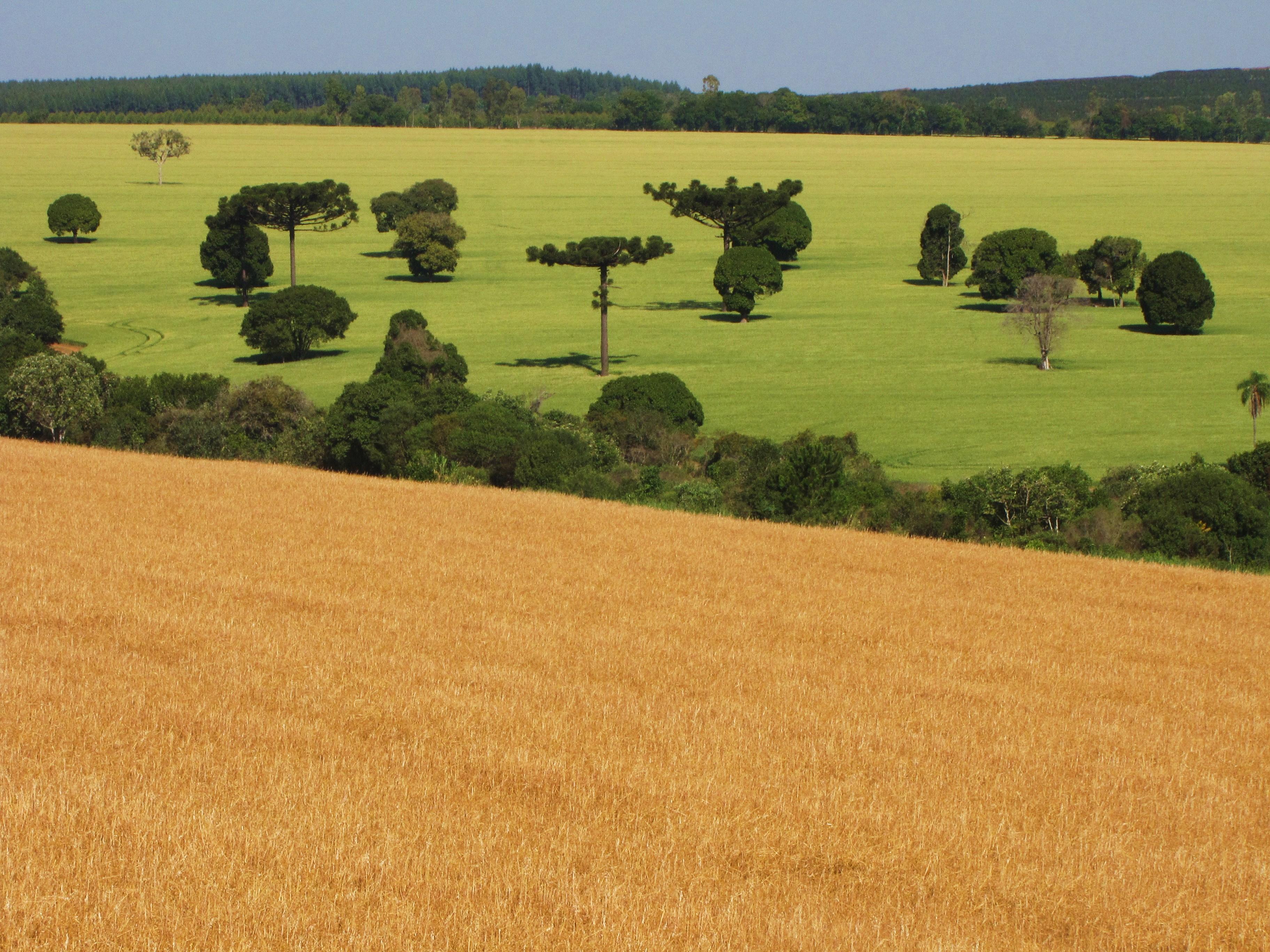 Qual a diferença entre módulo rural e módulo fiscal?