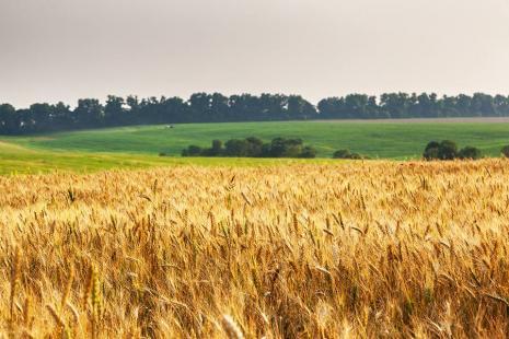 Com a ajuda do clima, Paraná poderá ter nova safra recorde.