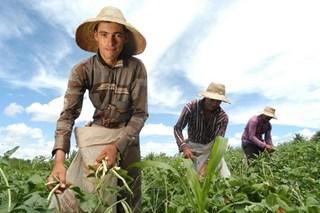 Melhores Empresas para Trabalhar no Agronegócio
