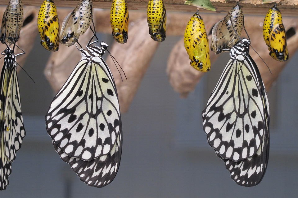 digital transformation from cacoon to butterfly