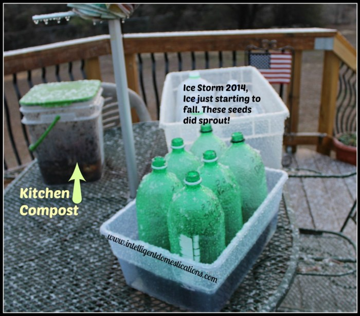 Winter Seed Sowing. How to sow seeds in milk jugs for winter seed sewing. How to used plastic containers for winter seed sowing