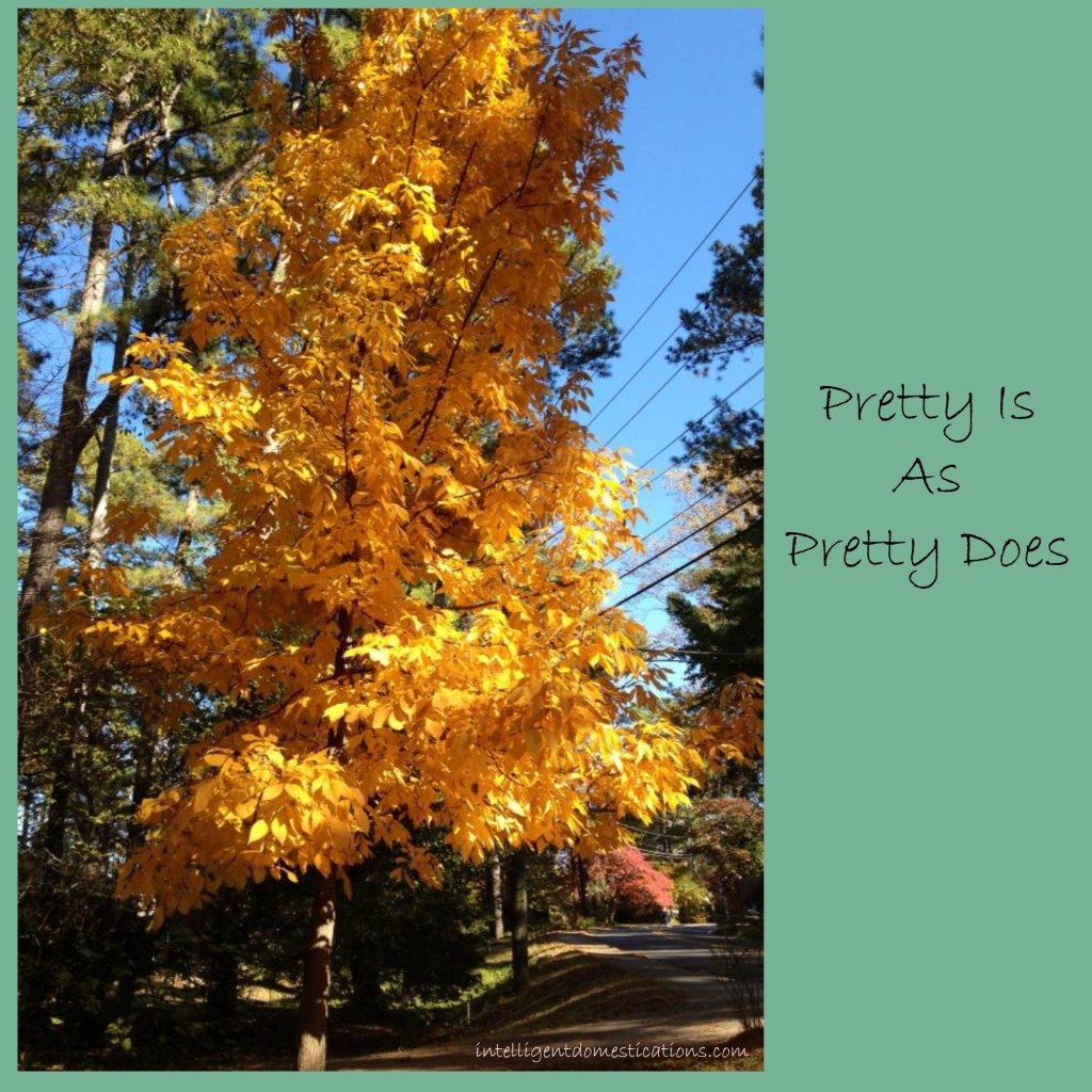Pretty Is As Pretty Does.intelligentdomestications.com