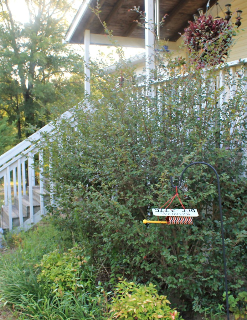 Loropetalum shrubs. Nandina and  liriope border the front porch.www.intelligentdomestications.com