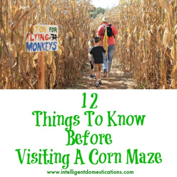 12 Things to know before visiting a corn maze.