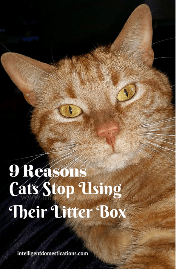 9 Reasons Cats Stop Using Their Litter Box. Why do cats stop using their litter box.