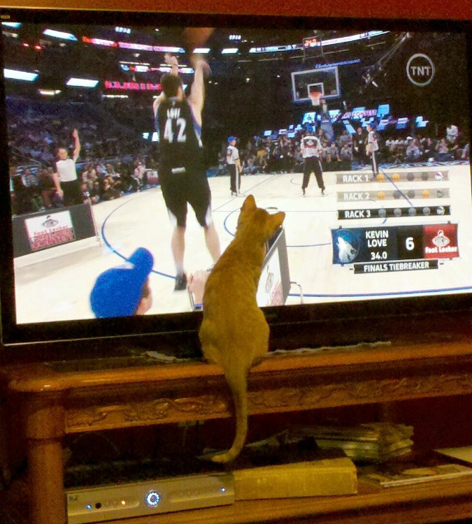 Hooblee watching basketball on tv