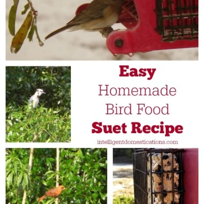 Easy Homemade Bird Suet Recipe