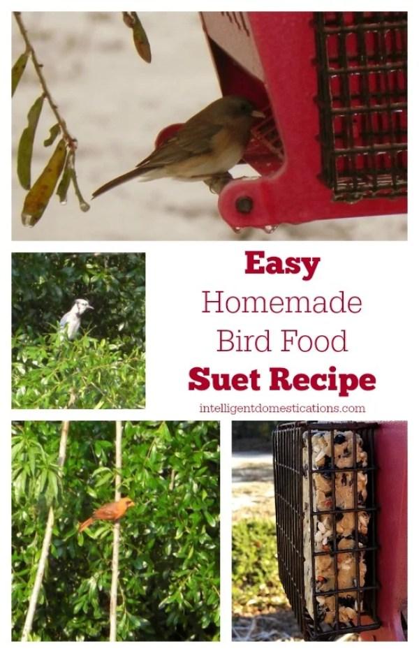 Easy-Homemade-Bird-Suet-Recipe-intelligentdomestications.com #birding