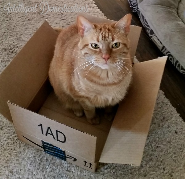 Hobblee sitting in the Amazon prime box.intelligentdomestications.com