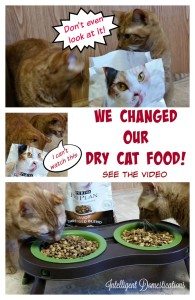 We Changed Our Dry Cat Food. See the Video.intelligentdomestications.com