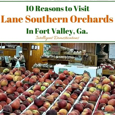 10 Reason's to Visit Lane Southern Orchards