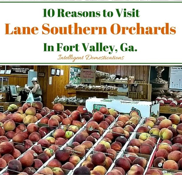 10 Reasons To Visit Lane Southern Orchards in Fort Valley Georgia
