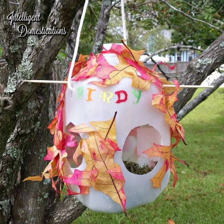 how-to-make-milk-jug-bird-house-see-three-designs-at-intelligentdomestications-com