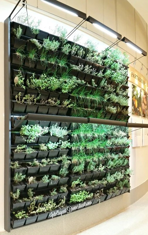 the-indoor-herb-wall-at-chik-fil-a-home-office-in-atlanta