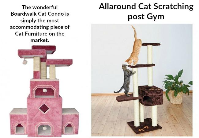 shop-cats-play