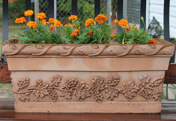 Best Annual Flowers for full sun. Colorful annual flowers to plant for curb appeal. Dwarf marigolds in a container. #curbappeal #prettyflowers