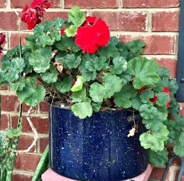 Add colorful annual flowers to your front entry for curb appeal. #curbappeal