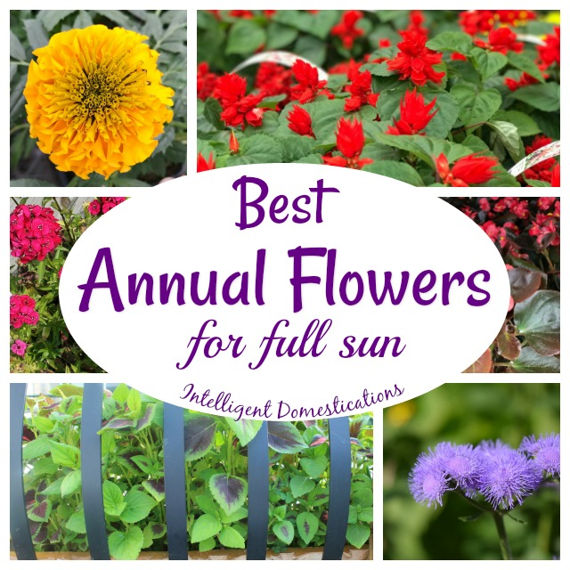 Best Annual Flowers for Full Sun. 15 Annual Flowers to plant in your flower beds this summer. #annualflowers