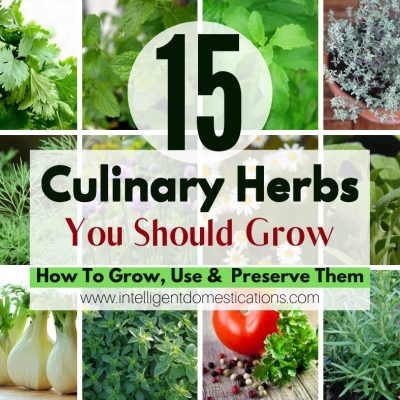 15 Culinary Herbs You Should Grow