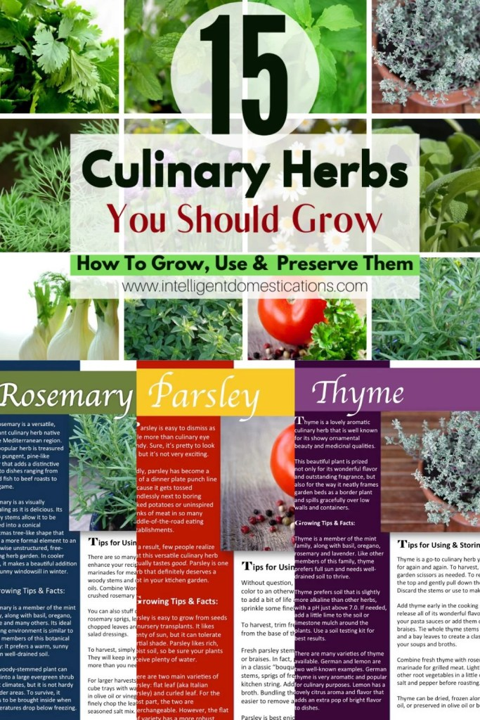 Pictures of herbs to grow at home