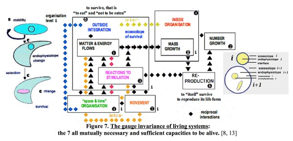 the-gauge-invariance-of-living-systems
