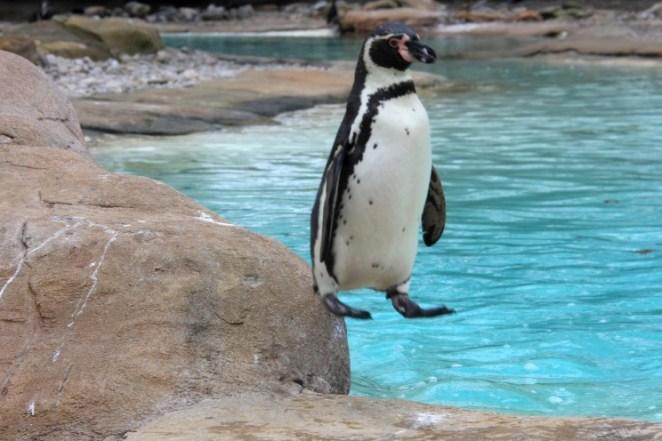 Funny photo of weird penguin