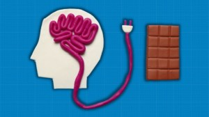 Brain 'Hunger Switch' mechanism discovered