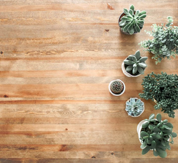 3 Indoor Plants for Beginners