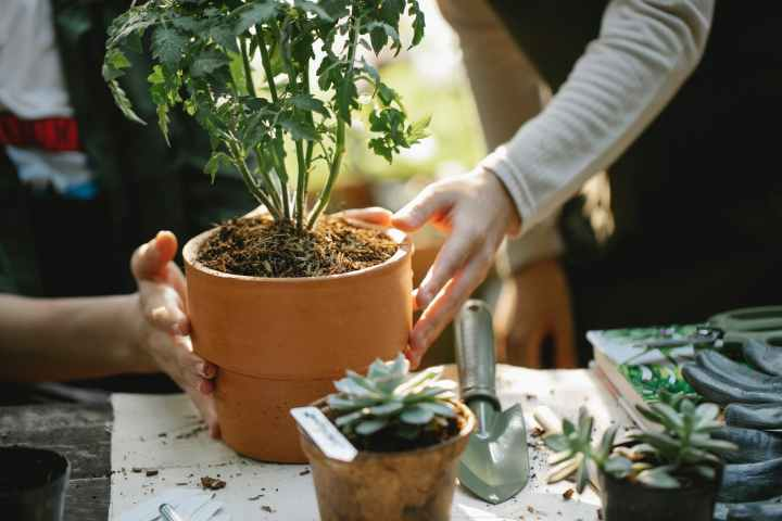 The Easiest Way to Start a Garden