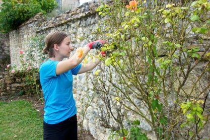 Yard work, Help Exchange, France | Intentional Travelers