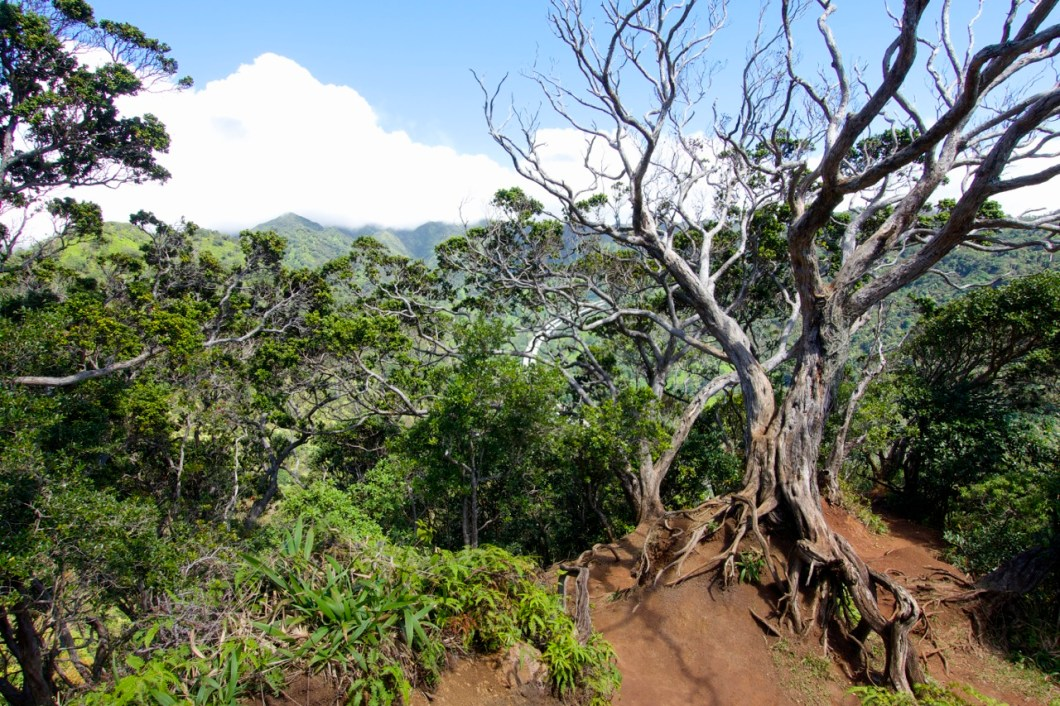 Aiea Loop Trail on Oahu | Intentional Travelers