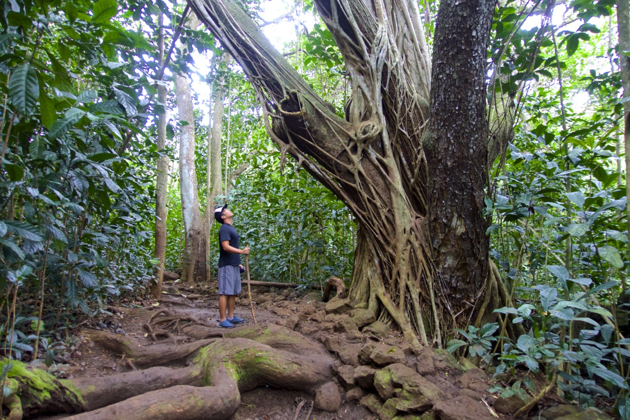Why Visit Oahu