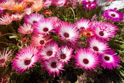 Yamai Yamaguchi Flower Land, Things to Do Around Iwakuni, Japan | Intentional Travelers