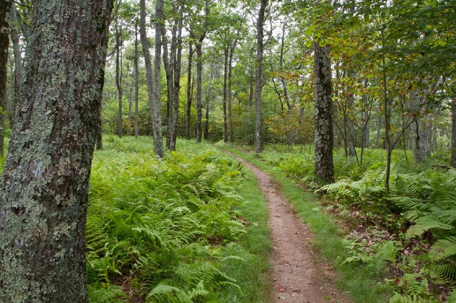 Forest Stoneyman Trail Path Shenandoah National Park