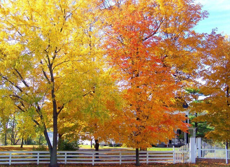 trees-20610_1280