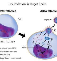 hiv infection in target cells [ 1024 x 819 Pixel ]
