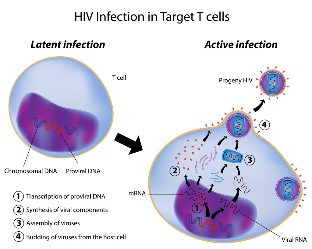 hight resolution of hiv infection in target cells