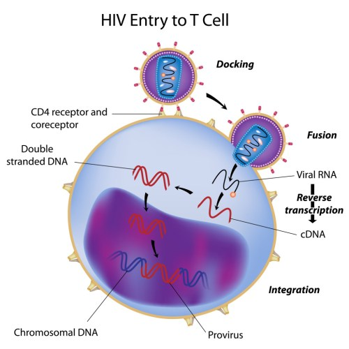small resolution of hiv entry into t cell