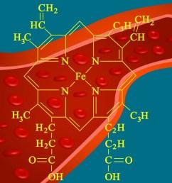 heme structure of hemoglobin [ 1024 x 790 Pixel ]