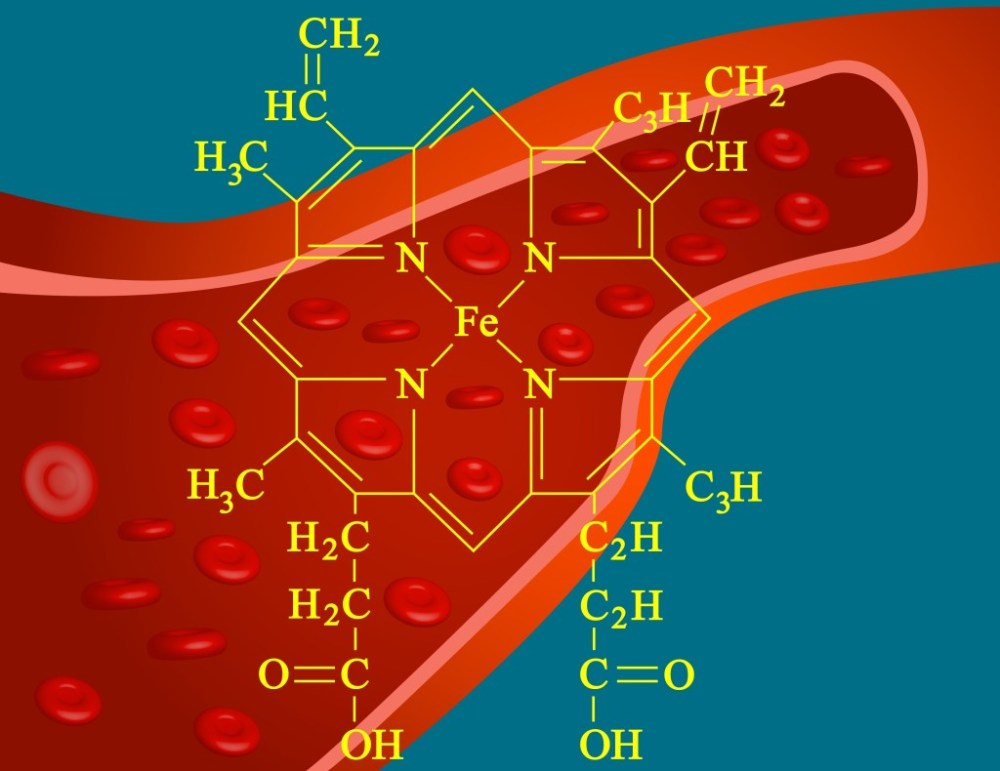 medium resolution of heme structure of hemoglobin