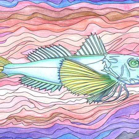 Coloured in drawing of fish
