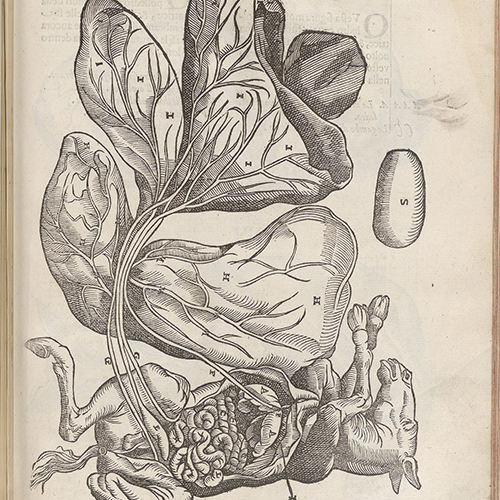Anatomia del cauallo, infermita, et suoi rimedii: opera nvova, degna di qualsivoglia prencipe, & caualiere, & molto necessaria à filosofi, medici, cauallerizzi, & marescalchi
