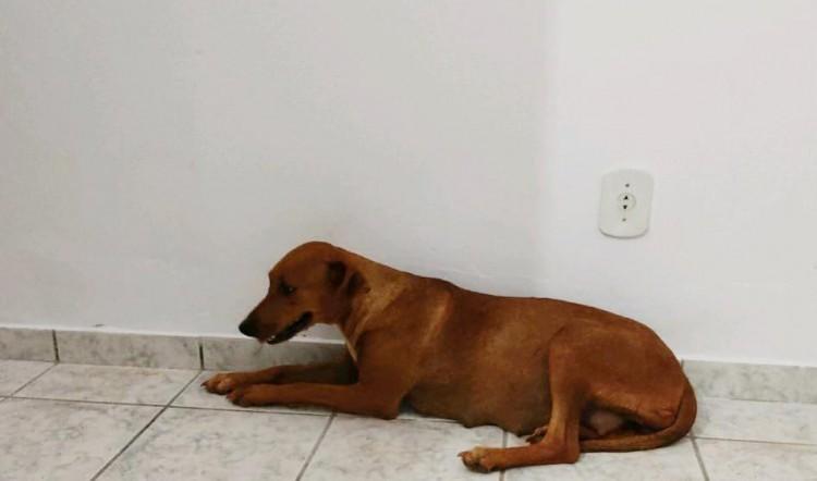 Dupla é multada em R$ 3 mil após abandonar cadela em estrada