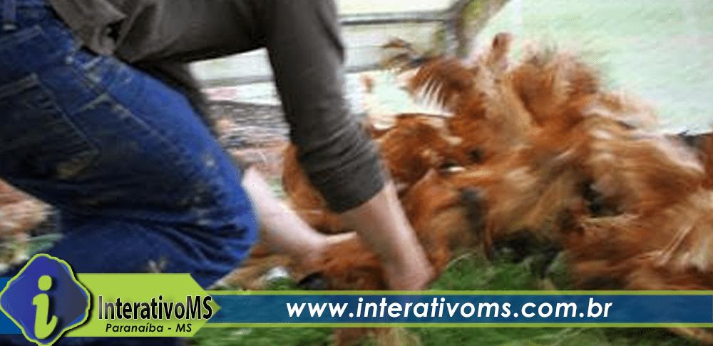 Roubo de galinha vira caso de Polícia em Paranaíba