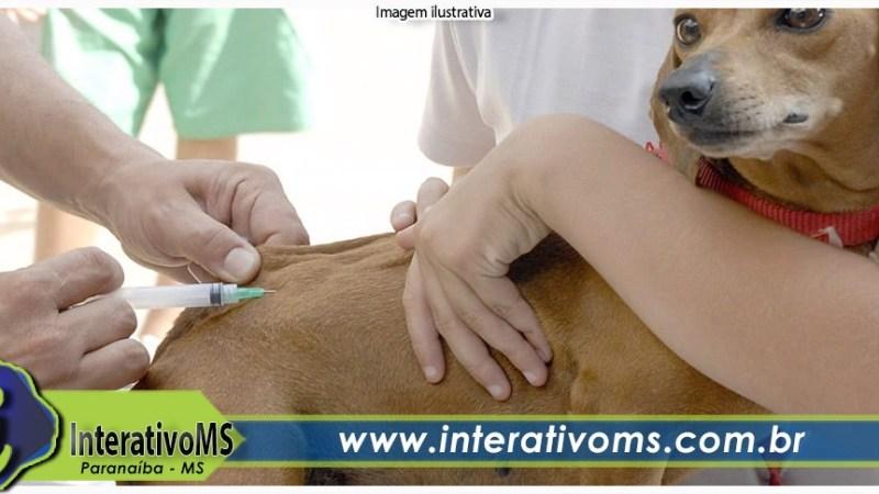 Dia D da vacinação antirrábica será neste sábado em Paranaíba